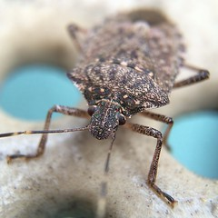 Freckles the Bug #macro with @olloclip lens