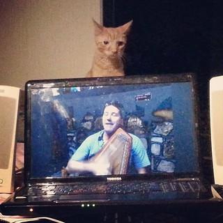 #Cats enjoyed my live streaming cat show too. http://catdrinkingsongs.com photo by Jeffrey Evans