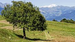 Montagne 2014