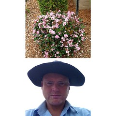 Indian Hawthorn - Pink Variety #gardens at Tea Gardens #frontback @frontbackapp
