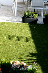 Morning Shadow