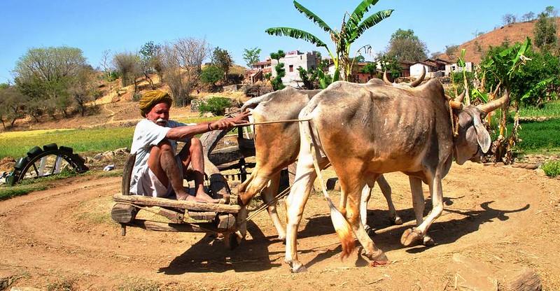 185 bomba de agua animal en Natwara (24)