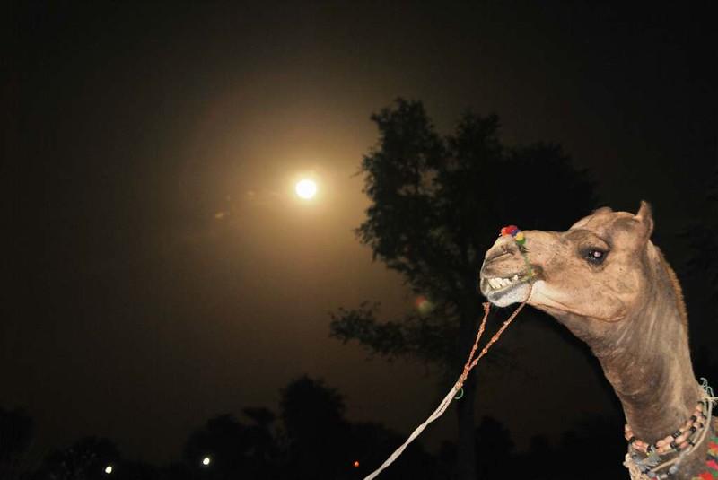 309 Camel safari a Jaisalmer (46)