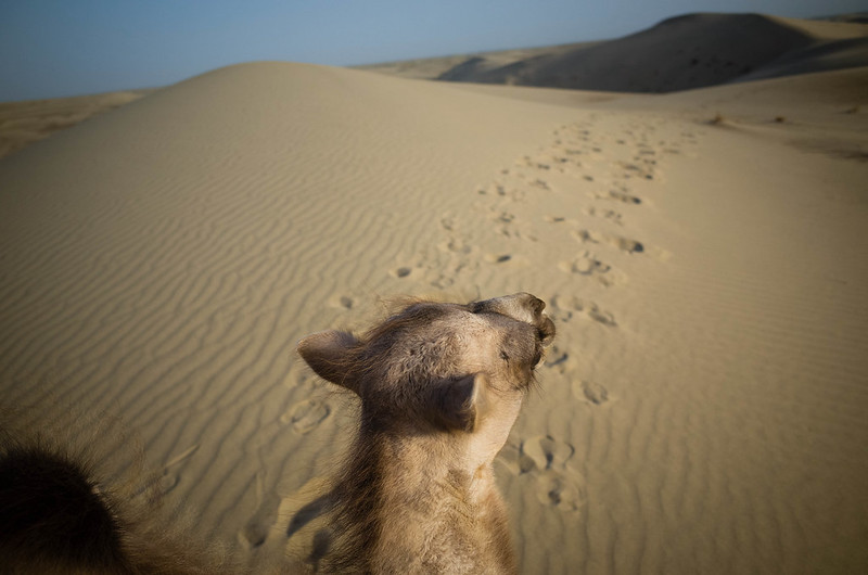 Silk Road: The endless sea of sand dunes in Taklamakan Desert