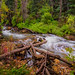 "Big Cottonwood Creek by Scott Stringham ""Rustling Leaf Design"""