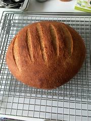 Bread 28