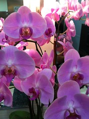 Don Dae Gam Orchids