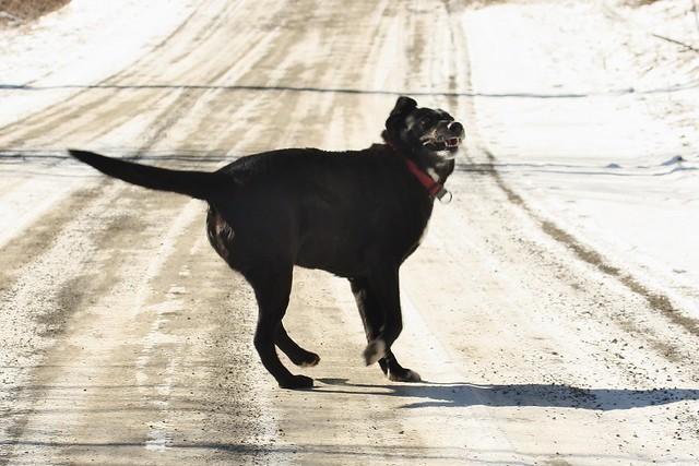Rascal the Raider Dog