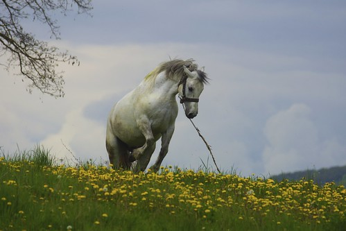Romania grey