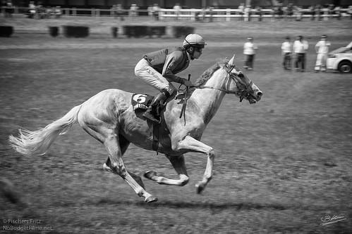 Flying_Horse.jpg