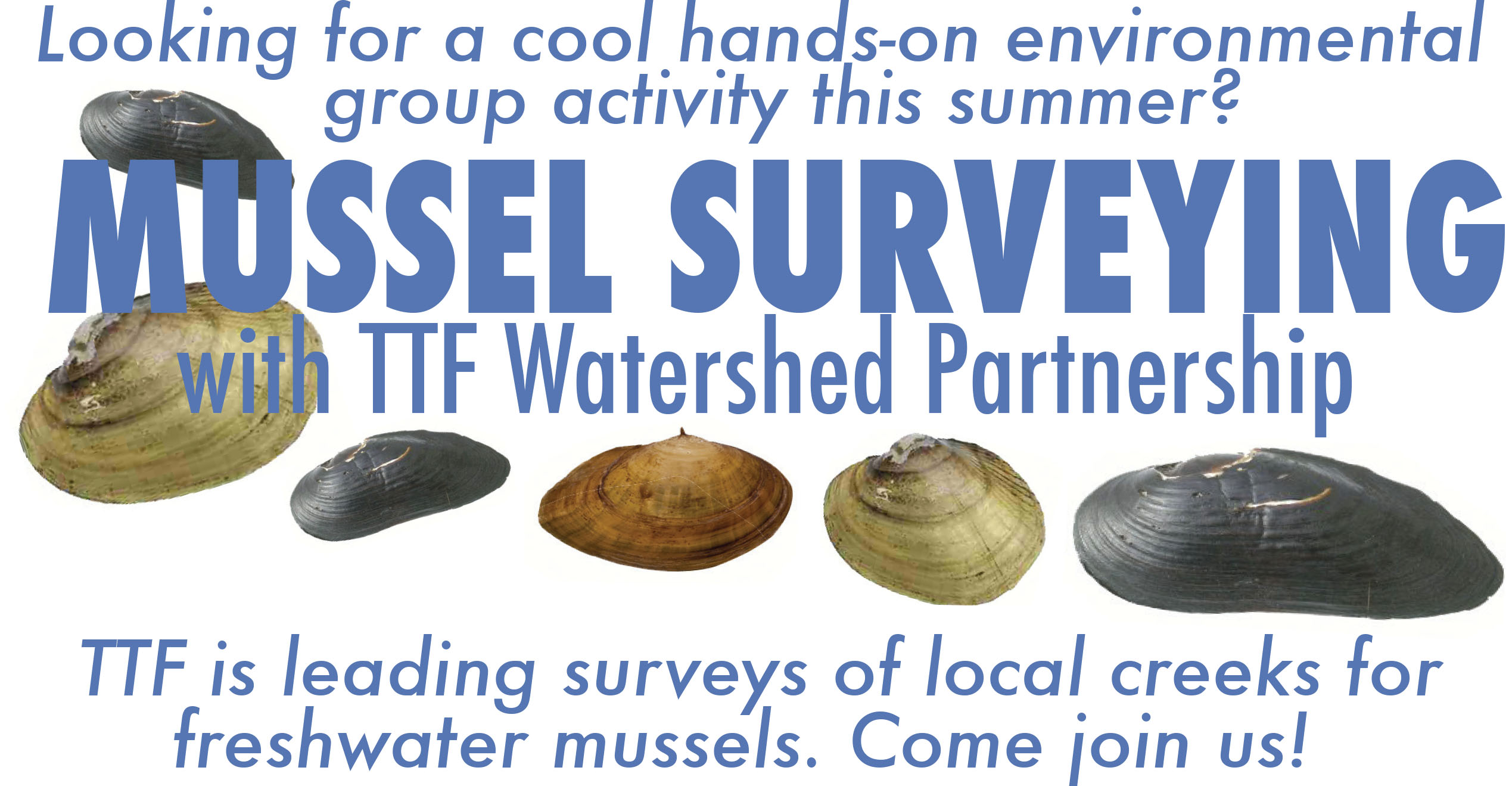 Mussel Surveying Banner