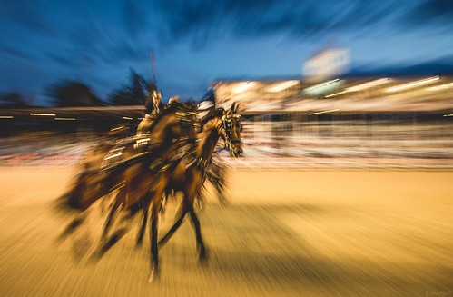 horses horse motion blur night driving carriage pennsylvania pa devon horseshow 2014 devonhorseshow