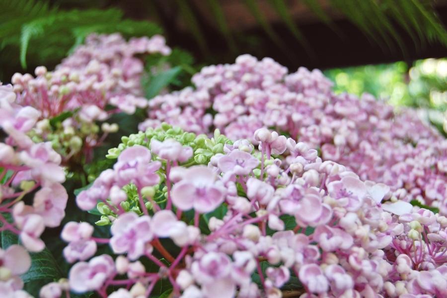 Marché aux fleurs (9)