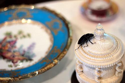 Beetle for tea