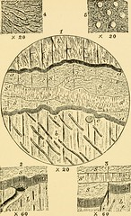 """Image from page 264 of """"Relics of primeval life, beginning of life in the dawn of geological time"""" (1897)"""