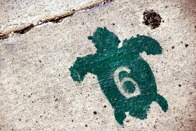 Sea Turtle Mark