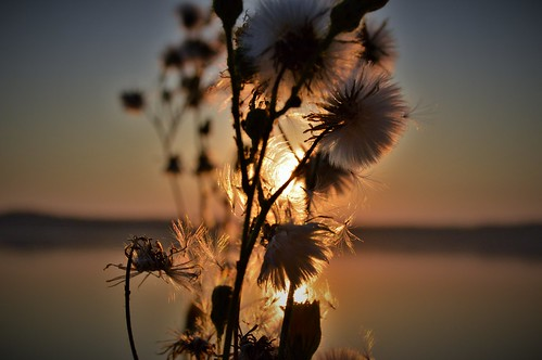 ocean morning flowers water beautiful fauna sunrise washington flora nikon chico peninsula kitsap nikond3200 d3200