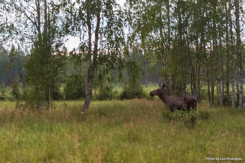 4 días en Laponia sueca-8