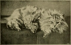 "Image from page 108 of ""Our domestic animals, their habits, intelligence and usefulness;"" (1907)"