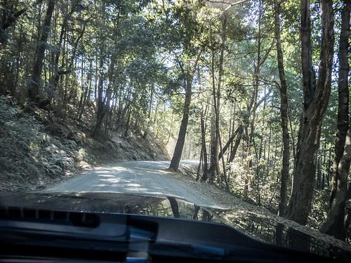 Coastal Redwoods and Fog-089