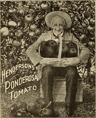 """Image from page 37 of """"Henderson's wholesale catalogue. : seeds, implements, fertilizers, insecticides &c. for market gardeners and truckers"""" (1911)"""