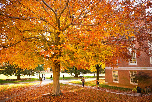 Students walk among fall foliage