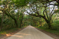Live Oak Avenue, Botany Bay, Edisto Island