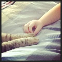 The Creation of Kitties