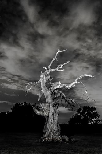 nightphotography sky lightpainting tree night clouds oak texas nightsky oaktree valleyviewtexas brokenoakranch