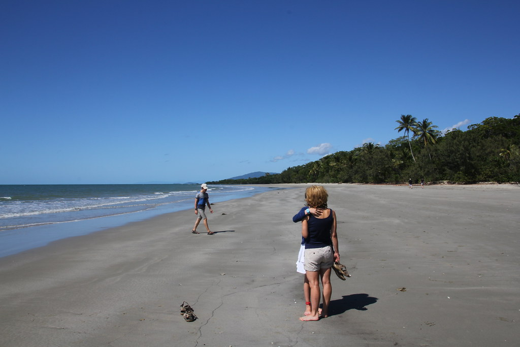 daintree rainforest, daintree river, daintree river ferry, cape tribulation, myall beach, cape tribulation beach. thornton beach, cape tribulation exotic fruit farm, jungle surfing, ferntree rainforest lodge, dubuji boardwalk, cassowary