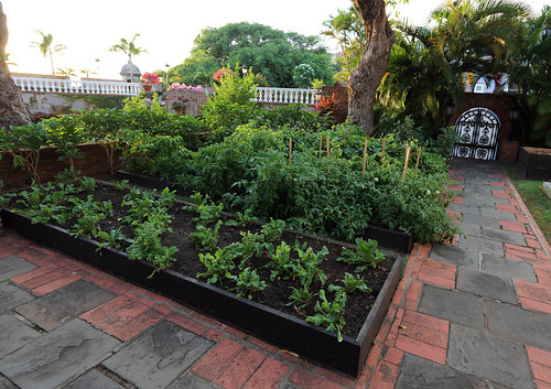 Lush herbs and vegetables grow in La Fortaleza People's Garden.