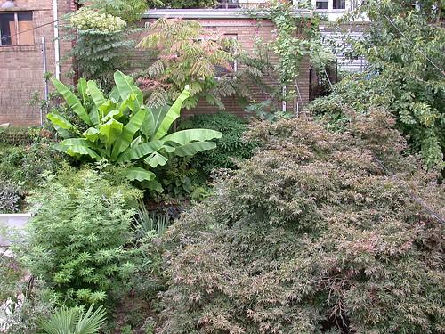 Garden, mid-September