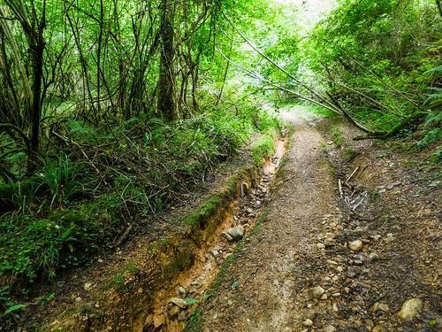 Camino Via Tolosana 587.jpg