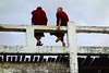 Two monks on U-Bein bridge Myanmar