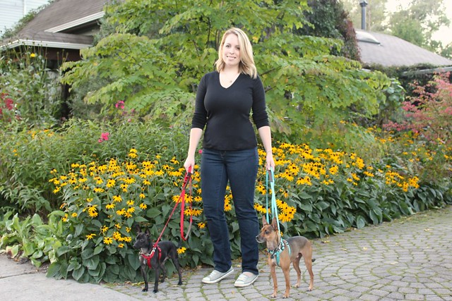 walk-in-sync-dog-walking-training-system