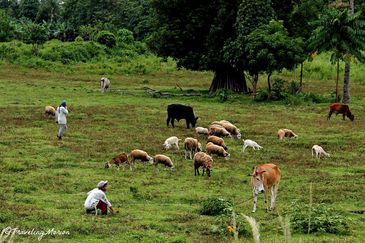 Farm Life Balingasag, Misamis Oriental