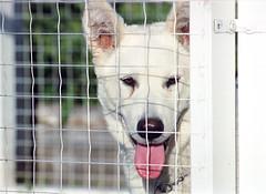 Naria Dog