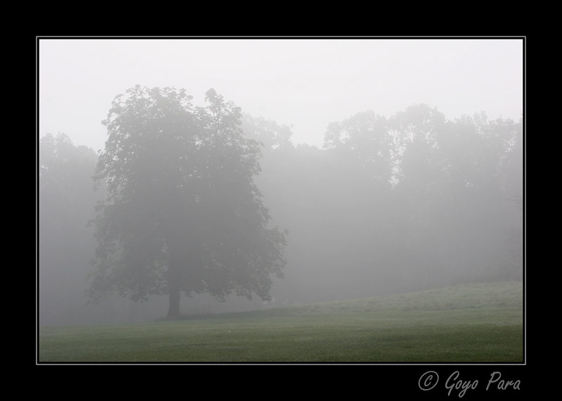 The trees in mist
