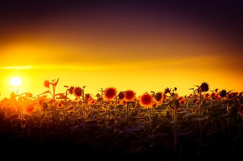 flowers nature sunrisessunsets placetravelnature