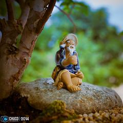 dedito arriba para mi bonsai