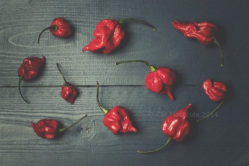 red hot chilli peppers...