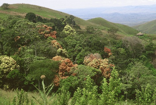 A view from Nyankunde mountain