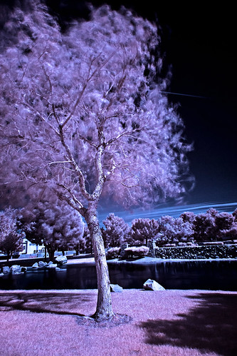 park sky usa tree grass clouds america landscape ir outside outdoors pond lasvegas nevada places infrared
