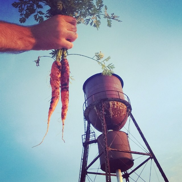 Brooklyn gardening y'all.  #carrots #carrot #watertower #rooftop #vegetablegarden #rooftop #NYC #Brooklyn #vegetables #healthyeating #garden #gardening #urbanfarming #urbangarden #containergarden #harvest  #gardenchat  #farmgirl #getgrowing #greenthumb #h