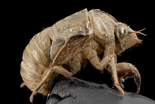Cicada, shell, upper marlboro, md_2014-07-10-19.57.12 ZS PMax