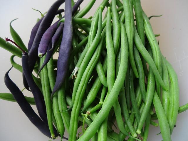 Beans from the garden