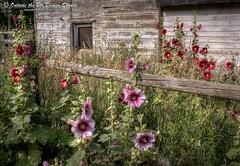 New Life on the Old Farm - Eldorado Springs, Colorado