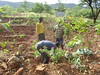 Ethiopia - School Forest Garden in Gersale School - June 2014