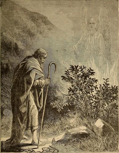 Moses rod photo