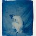 """certitude"" cyanotype"